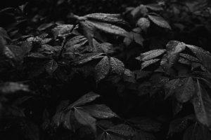 Portada-Brisa-Lluvia-Foto Andrew Neel-(@andrewneel)-Unsplash-1600x-(1)-min