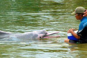 Portada-Delfines