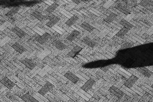 Portada-Desaparecidos-Sombras-Foto Matthew Ansley-(@ansleycreative)-Unsplash-1600x-(1)-min