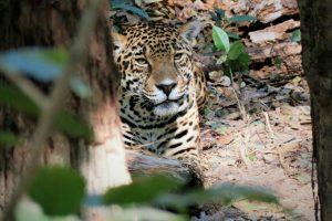 Portada-Jaguar-Zoomat-1600x-min