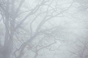 Portada-Niebla-Foto Annie Spratt-(@Anniespratt)-Unsplash-1600x-(1)-min
