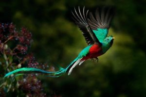 Portada-Quetzal-Foto Viatori-1-(1)-min--https://revistaviatori.com/--