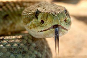 Portada-Serpiente-Pixabay-1600x-ke653642-min
