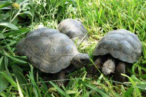 Portada tortugas