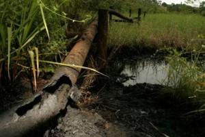 Foto: Ecoportal.net