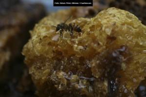Slider-abejas