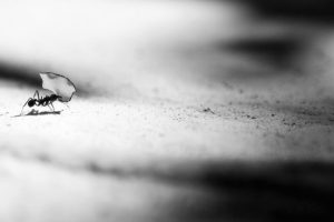 Portada-Hormiga-Foto Vlad Tchompalov-(@tchompalov)-Unsplash-1600x-(4)-(4)--https://unsplash.com/@tchompalov--