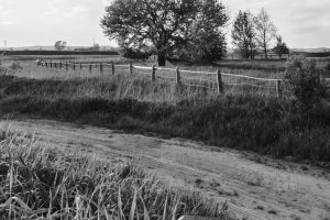 Portada-Mundo rural-Foto Tomasz Filipek-(@tombrand)-Unsplash-1600x-(1)-(1)--https://unsplash.com/@tombrand--