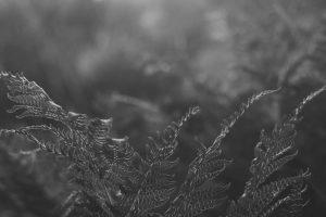 Portada-Niebla de la mañana-Foto Sergiu Vălenaș-(@svallenas)-Unsplash-1600x-(1)-(1)