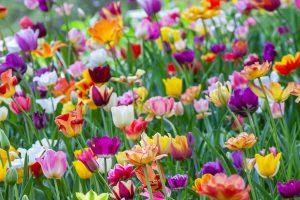 Portada-Primavera-Foto Yoksel Zok-(@yoksel)-1600x-(1)-(1)--https://unsplash.com/@yoksel--