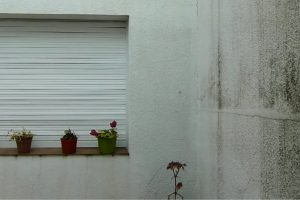 Portada-Saguí-1600x-(2)-(2)