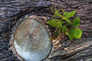Portada-Vida-Naturaleza-Resiliencia-Foto Dennis Larsen-Pixabay-1600x-(1)-(1)