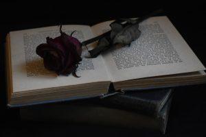 Portda-Libro y Rosa-Foto Mariah Hewines-(@brunette23)-Unsplash-1600x-(1)-(1)--https://unsplash.com/@brunette23--